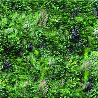 Projet #12 vegetalisation du musee